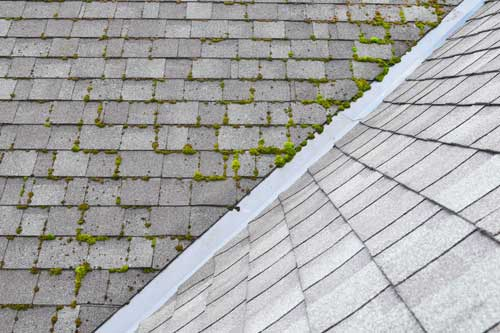 shingle roof growing moss