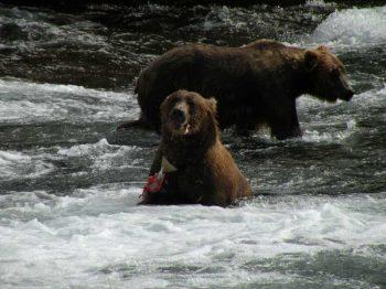 west bear fishing